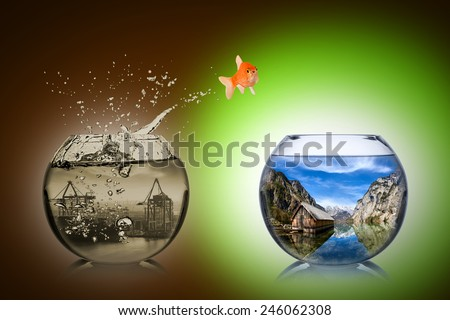 fish rethink and change concept  - stock photo