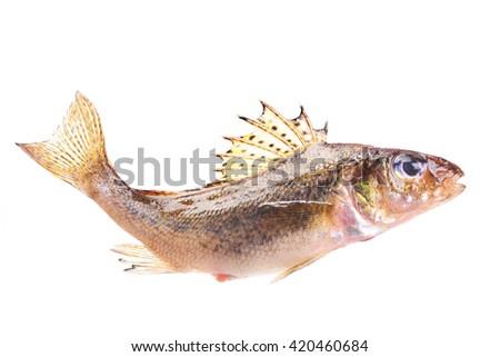 Fish ruff - stock photo