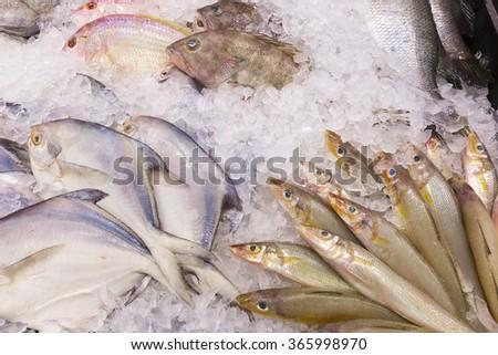 Fish sale in market. Frozen fish on ice. - stock photo