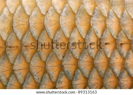 Fish Scales Macro Closeup