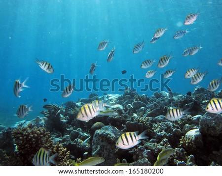 Fish school - stock photo