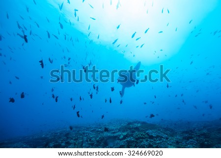 fish school - stock photo