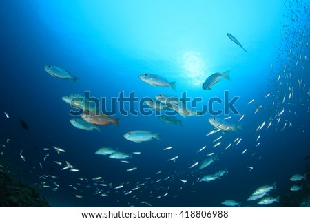 Fish school in ocean (Crescent-tailed Bigeyes) - stock photo
