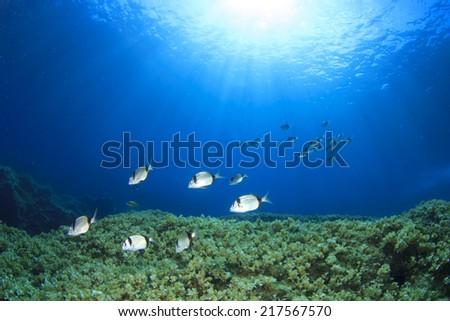 Fish school on underwater reef - stock photo