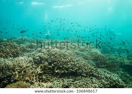fish school underwater