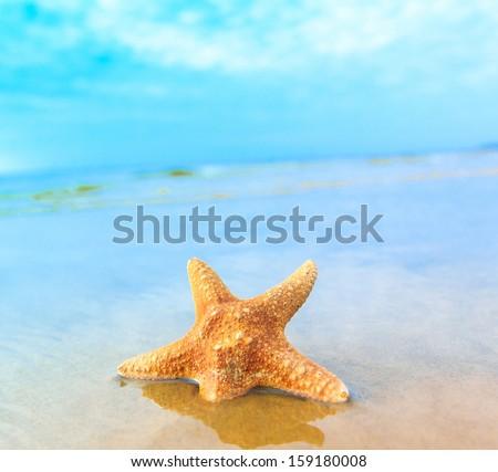 Fish Sea Beach  - stock photo