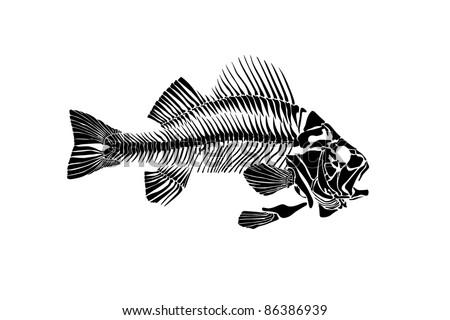 Fish skeleton isolated on white background - stock photo