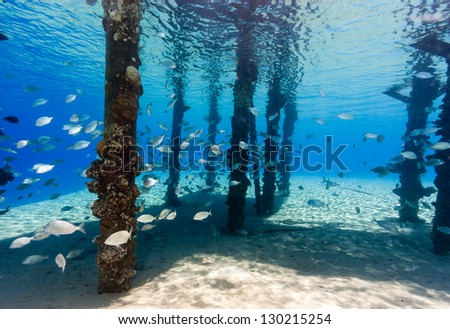 Fish swim around the legs of a manmade jetty in the Red Sea - stock photo