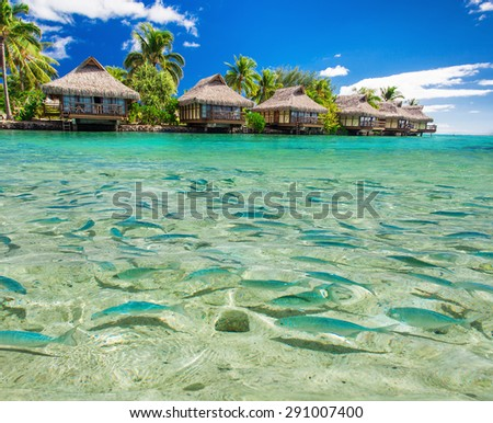 Fish swimming in the tropical lagoon with overwater villas and palm trees - stock photo
