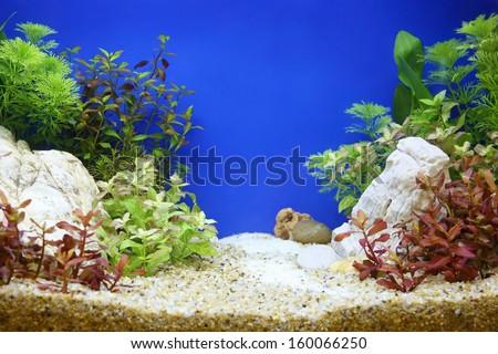 Fish tank - stock photo