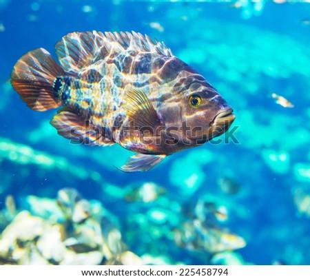 fish under water - stock photo