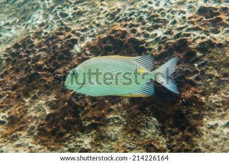 Fish underwater - stock photo