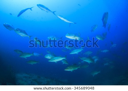 Fish underwater in ocean