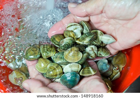 fish vendor cleaning clams - stock photo