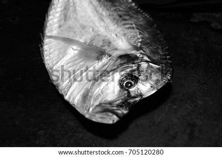 Vomer stock images royalty free images vectors for Cold smoking fish