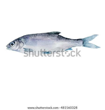 fish watercolor isolated