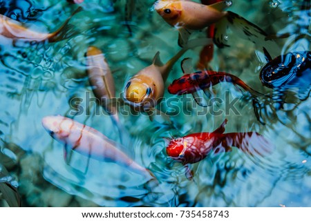 Pond stock images royalty free images vectors for Fake fish for pond