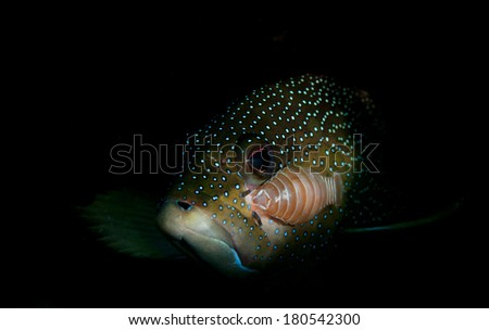 Fish with Parasites  - stock photo