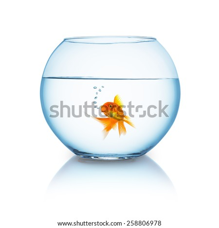 fishbowl with a breathing goldfish isolated on white - stock photo