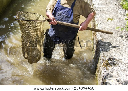 Fisherman catches a fish with net, on trout farm - stock photo