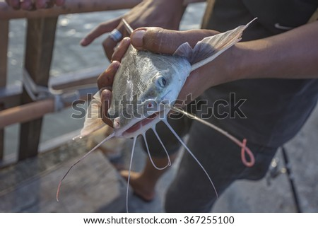 Fisherman caught a Catfish, low depth of focus, blurred background - stock photo
