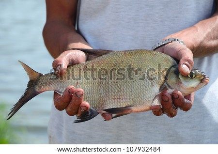 Fisherman holding a big bream catching in river - stock photo