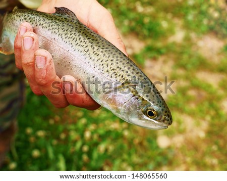 Fisherman holding a caught trout - stock photo
