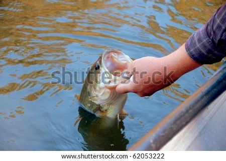 fisherman holding a large mouth bass closeup