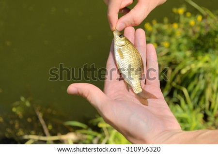 Fisherman holding a small fish - stock photo