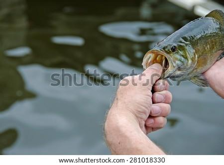 fisherman holding a smallmouth bass over freshwater lake - stock photo