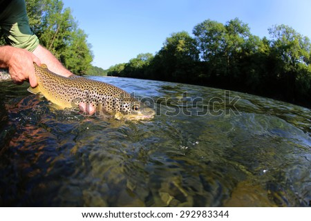 Fisherman releasing trout in river - stock photo