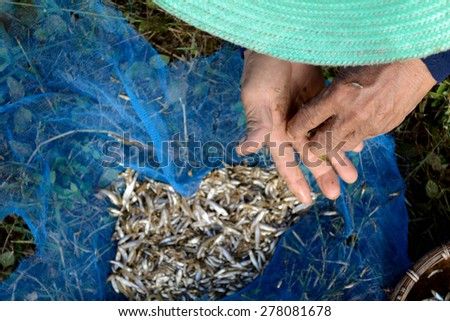 Fishermen catch fish and fish selection - stock photo