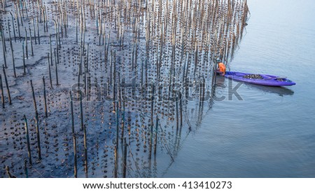 Fishermen collect shellfish culture. , Phang Nga, Thailand