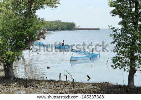 Fishermen working at the mangrove forest - stock photo