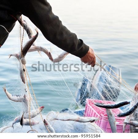 fishers hands take a net with fish - stock photo