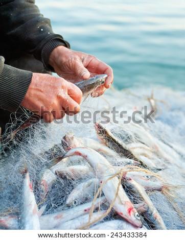 fishers hands take fish out of net - closeup shot - stock photo