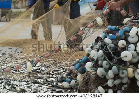 Fishers take fish out of a net