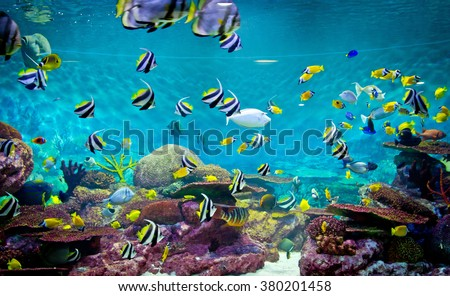 Fishes and coral, underwater life, tropical sea - stock photo