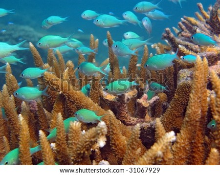 Fishes hiding in a coral - stock photo