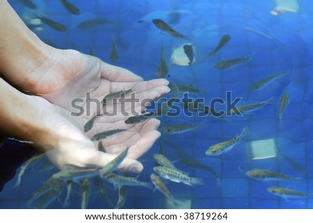 Fishes in Hands