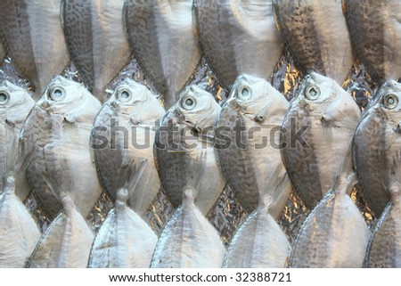 Fishes in row , in market - stock photo