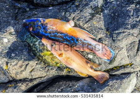 Fishes of Norway