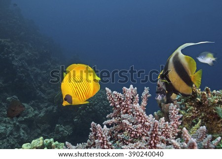 Fishes of the Red Sea - stock photo