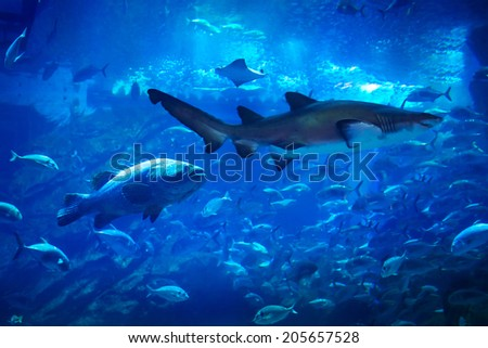 Fishes underwater in natural aquarium - stock photo