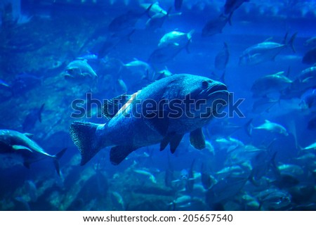Fishes underwater in natural aquarium