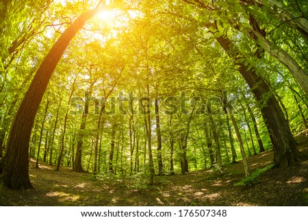 Fisheye shot of trees in the woods, with lens flare effect added in post production - stock photo