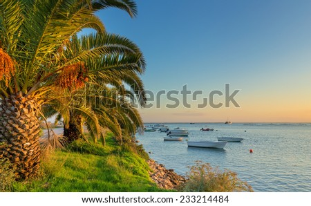 Fishing boats on the sea, palm trees on the beach. Portuguese traditional seascape. - stock photo