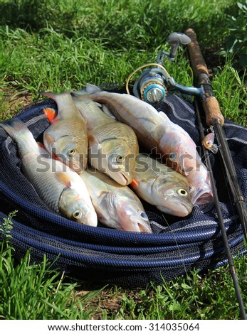 fishing catch on the grass and fishing gear - stock photo