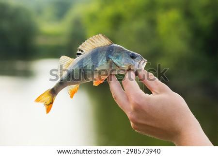 Fishing, fishing for perch. - stock photo