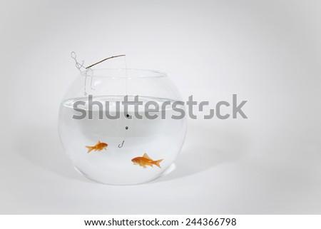 Fishing for goldfish  - stock photo